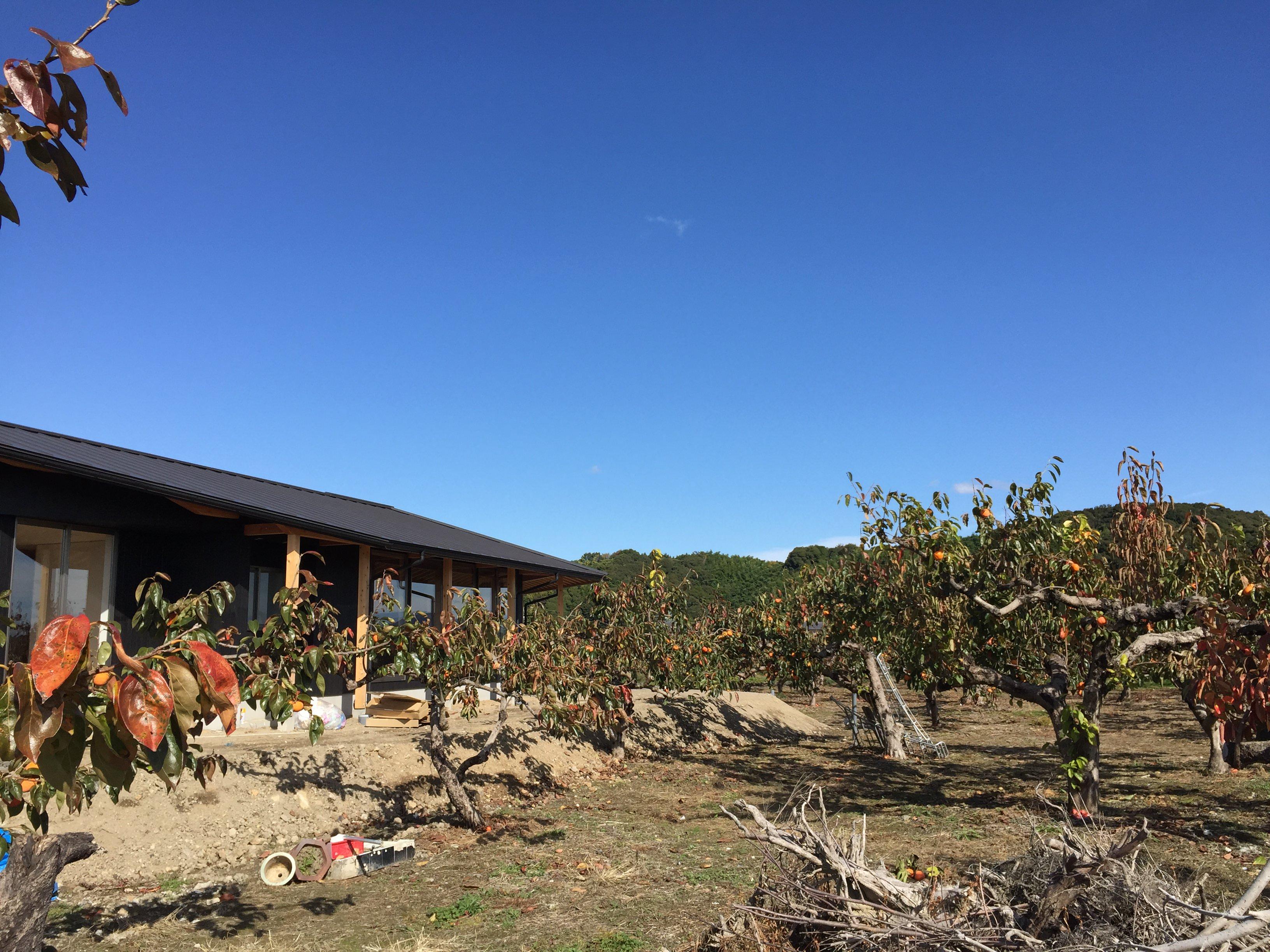 岐阜県本巣市「本巣の家」木造平屋建 現場