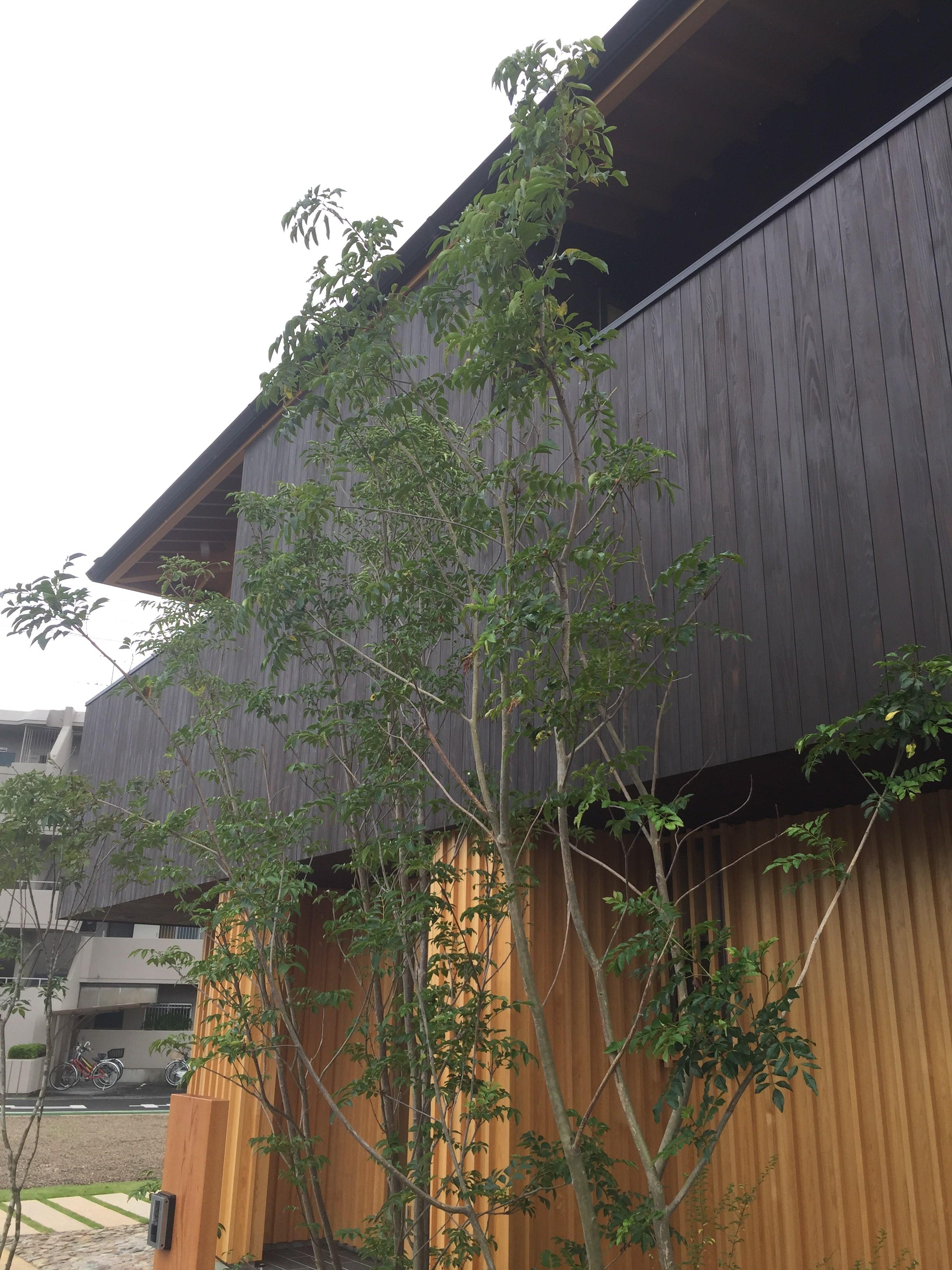 愛知県小牧市「桑原木材㈱モデルハウス」 国産材 木の家 完了検査